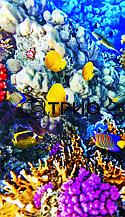 Настенный инфракрасный обогреватель Коралловый риф/рыбки