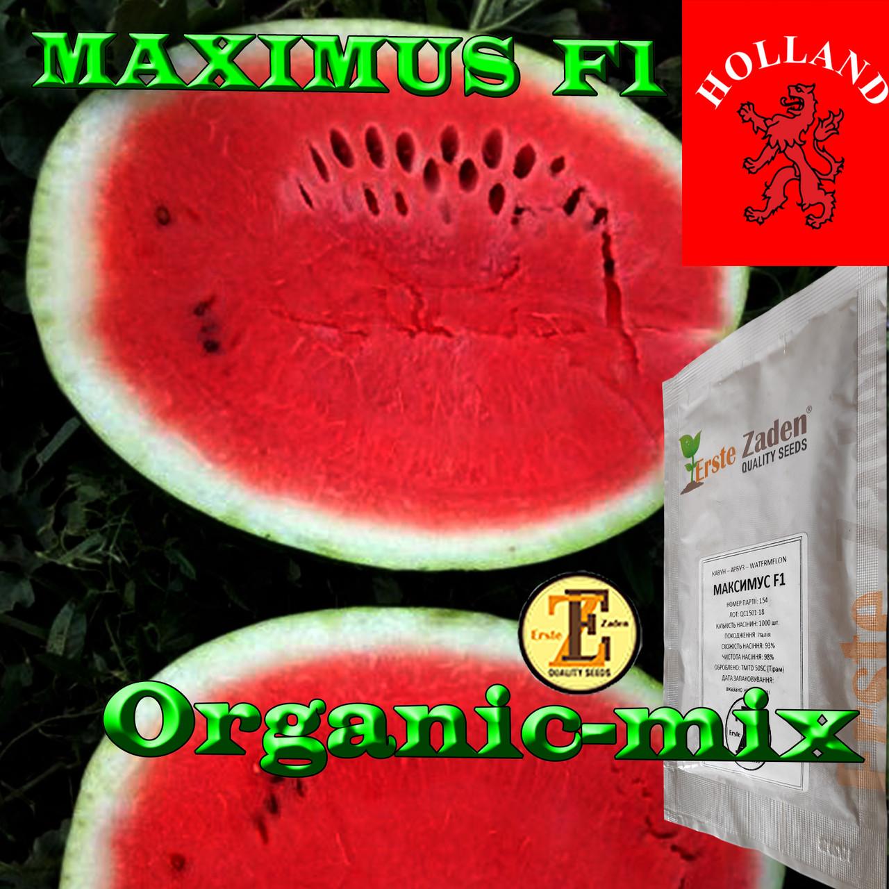 Семена арбуза МАКСИМУС F1 / MAXIMUS F1, ТМ Erste Zaden, 1000 семян