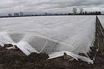 Агроволокно Texton PLANT-PROTEX (Польша) Белое 50 пл, фото 2