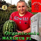 Семена арбуза МАКСИМУС F1 / MAXIMUS F1, ТМ Erste Zaden, 1000 семян, фото 2