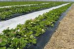 Агроволокно Texton PLANT-PROTEX (Польша) Белое 50 пл, фото 3