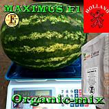 Семена арбуза МАКСИМУС F1 / MAXIMUS F1, ТМ Erste Zaden, 1000 семян, фото 3