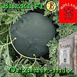 Семена, ранний, чорный арбуз БЛЕЙК F1 / BLEKI F1, ТМ Libra Seeds (Голландия), 1000 семян, фото 2
