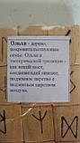 Руны деревянные Ольха, фото 2
