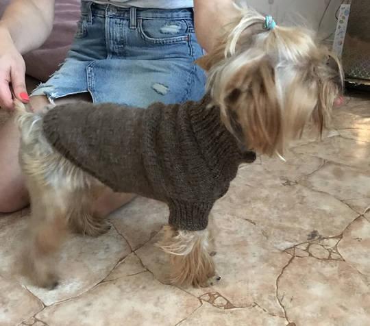 Вязание одежды для собак