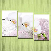 Современная модульная картина на холсте в гостиную Нежные орхидеи, 118х75 см