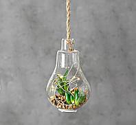Светодиодная лампа с  LED установкой стекло h12см 1005915 лампочка с растениями, фото 1