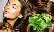 Использование крапивы для ухода и лечения волос