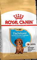 Royal Canin Dachshund Puppy 1,5кг + 2 консервы для щенков породы такса