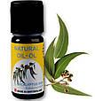 Эфирное масло Эвкалипт,натуральное, Швейцария / Evcalyptus, фото 2