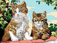 Картины по номерам 30×40 см. Котята на заборе