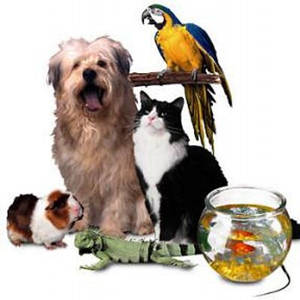 аренда птиц и животных