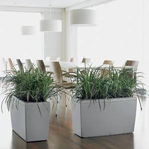 аренда живых растений