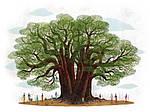 Деревья. Соха, Грайковский, фото 7