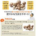 Seedcoms Сила грибів, 90 капсул на 90 днів, фото 3