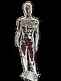 Манекен серебряный  мужской, фото 4