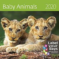 Календарь настенный HELMA 2020 30x30 см Baby Animals (LP03-20)