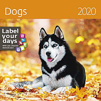 Календарь настенный HELMA 2020 30x30 см Dogs (LP02-20)