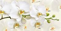Фотообои Prestige Белая орхидея  № 49