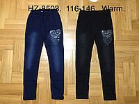 Лосины утепленные для девочек оптом, Glass Bear, 116-146 см,  № HZ-8503, фото 1
