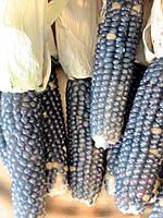 Семена Кукуруза попкорн Синий Шаман