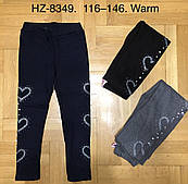 Лосины утепленные для девочек Glass Bear оптом, 116-146 рр. Артикул: HZ8349