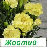 Гвоздика Ліліпот F1 (колір на вибір) 50 шт., фото 3