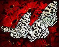 Картина по номерам Бабочки на герберах (BK-GX29432) 40 х 50 см Brushme [Без коробки]