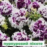 Петунія Пірует F1 (колір на вибір) 200 шт, фото 2