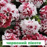Петунія Пірует F1 (колір на вибір) 200 шт, фото 3