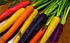 Семена Морковь Разноцветная микс, фото 4