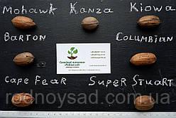 Саженцы пекана, сорта ореха и способы размножения