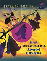 Детская книга Виталий Бианки: Как муравьишка домой спешил