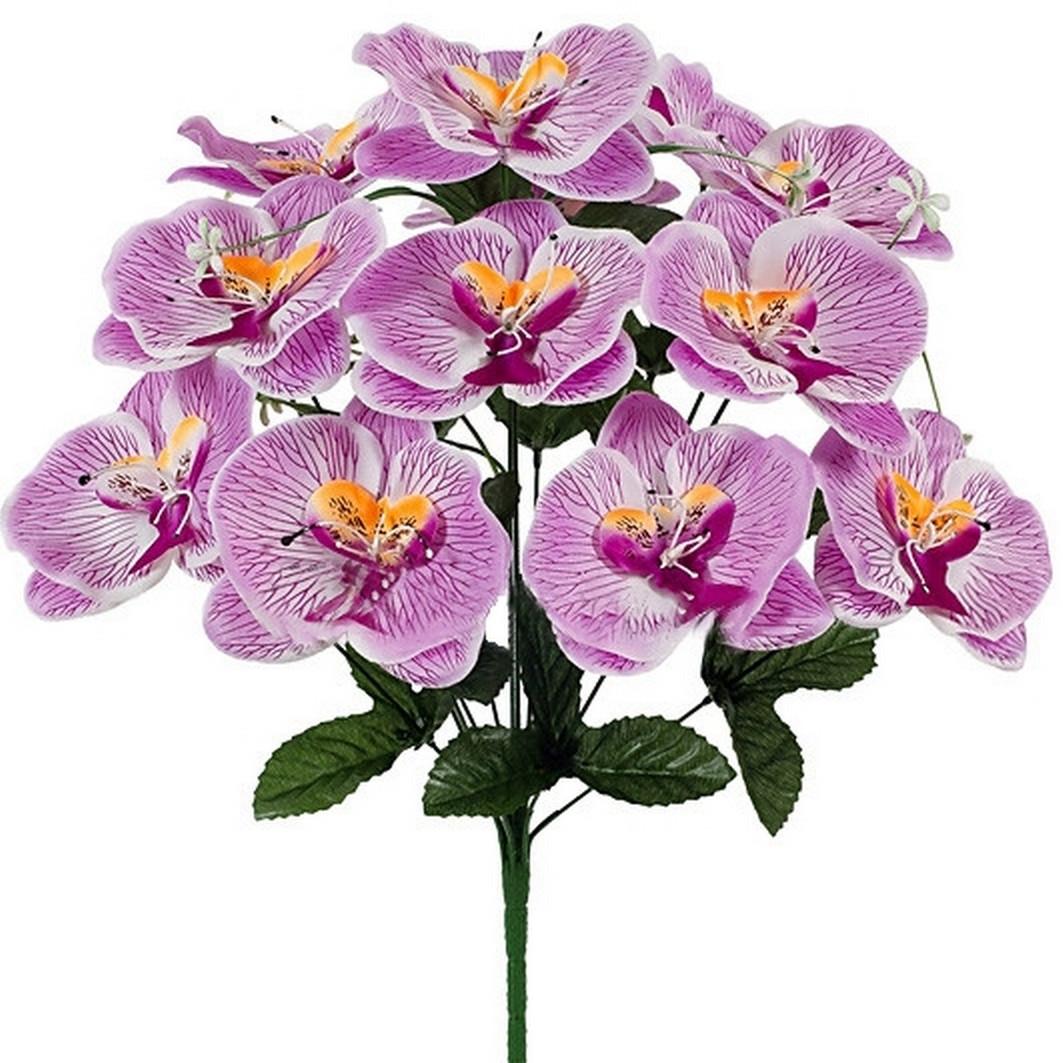 Букет орхидей фаленопсис, 52см (8 шт. в уп)
