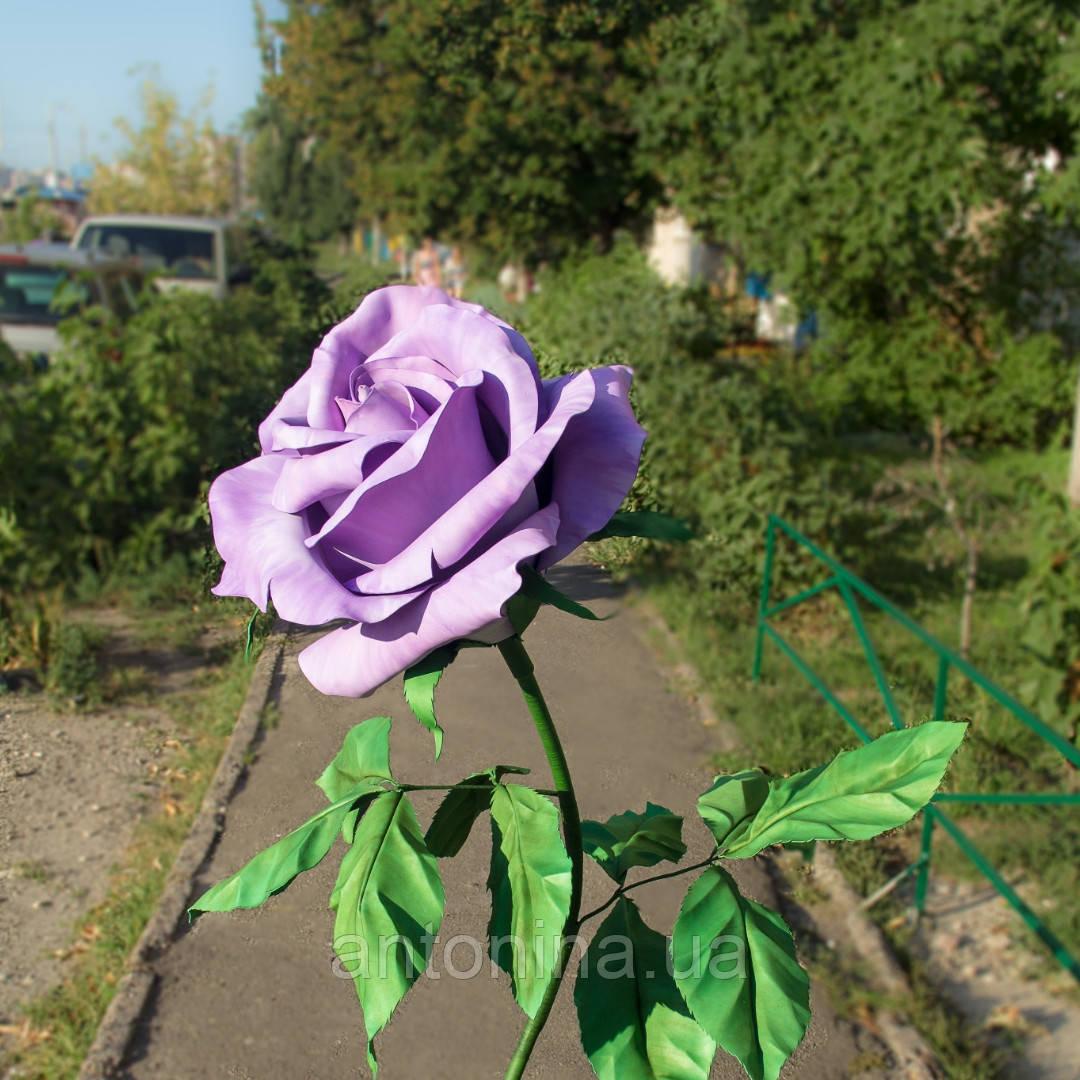 Ростовые, интерьерные цветы