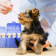 Противоопухолевые ветеринарные препараты