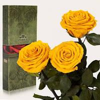 Три долгосвежих розы Золотистый Хризоберилл в подарочной упаковке (не вянут от 6 месяцев до 5 лет), фото 1