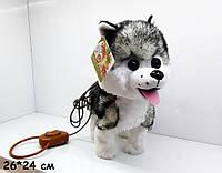 Детская мягкая игрушка собака хаски на поводке 3693 ходит