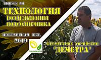 Технологія обробітку соняшнику в Полтавській області