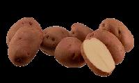 Семенной картофель Рудольф Элита 1-й репродукции урожай 2019