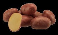 Семенной картофель Еволюшн Элита 1-й репродукции урожай 2019