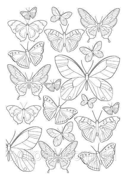 Шаблоны  для  айсинга и шоколада эскизы бабочки метелики 2