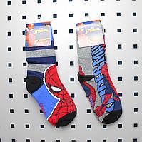 Детские демисезонные носочки для мальчика Spiderman р 23-26