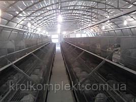 Кроле ферма под ключ