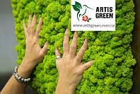 Вертикальное озеленение мхом