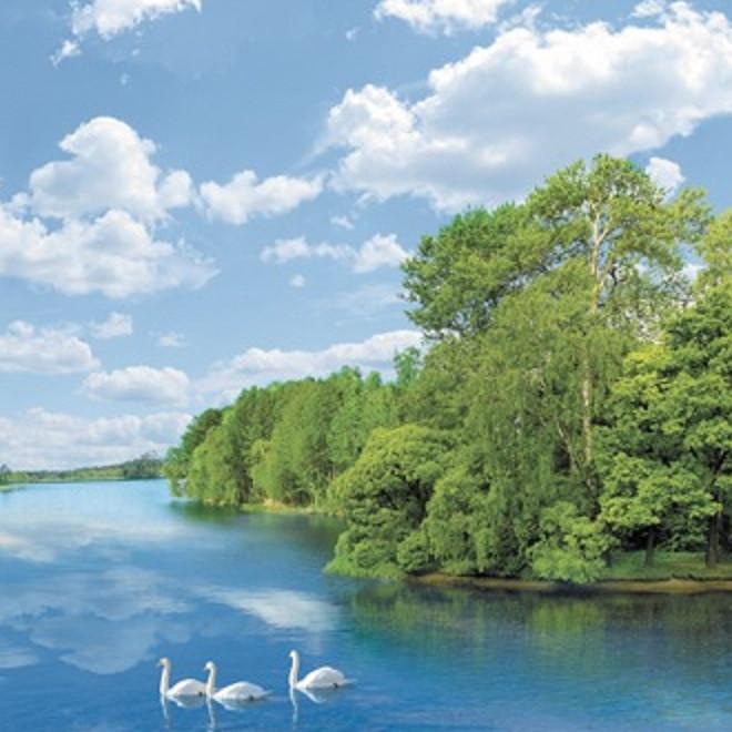Фотообои,  река, лес,  Утренняя песня, 20 листов, 196х350см