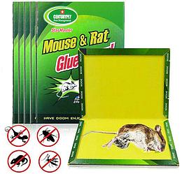 Клейова пастка від мишей, щурів, тарганів, павуків, змій 12х17см