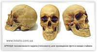Аренда человеческого черепа (гипсового) для фото и видео съёмок