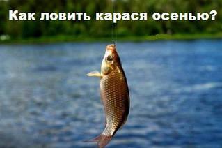 Как ловить карася осенью и где лучше рыбалка