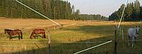 Электропастух для овец и коров (Гарантия 1 год)
